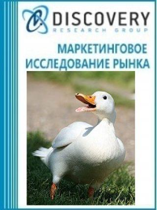 Анализ рынка живой утки в России