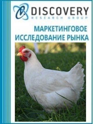 Анализ рынка живых кур домашних в России