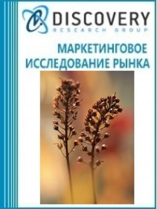Анализ рынка гречихи в России