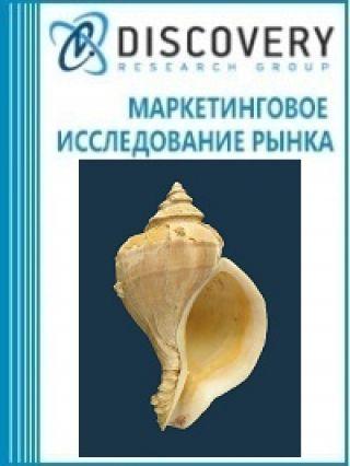 Анализ рынка кораллов, раковин и панцирей моллюсков в России