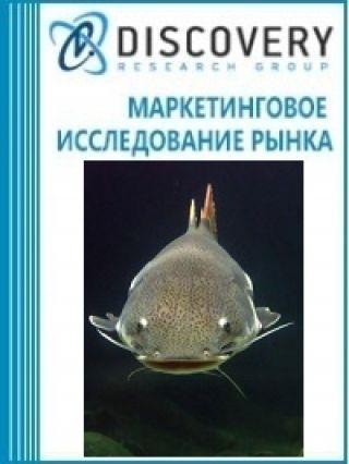 Маркетинговое исследование - Анализ рынка замороженного филе из рыбы тилапии, сома, карпа, угря в России