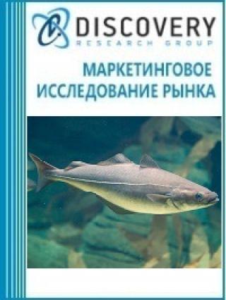 Маркетинговое исследование - Анализ рынка замороженной сайды в России