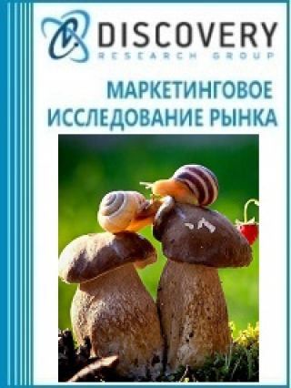 Маркетинговое исследование - Анализ рынка живых систем (пластиковой лабораторной посуды) в России