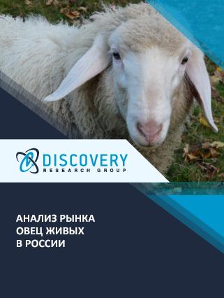 Анализ рынка овец в России (с базой импорта-экспорта)