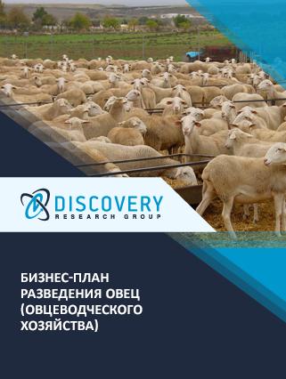 Бизнес-план разведения овец (овцеводческого хозяйства)