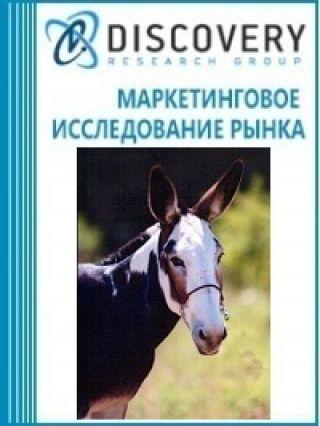 Анализ рынка живых лошаков в России