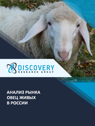 Маркетинговое исследование - Анализ рынка овец живых в России