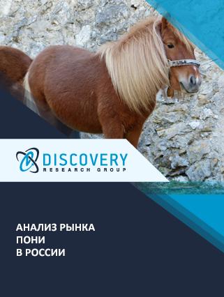 Маркетинговое исследование - Анализ рынка пони в России