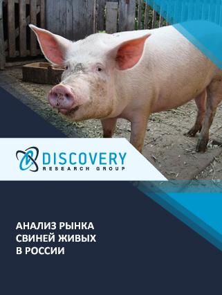 Маркетинговое исследование - Анализ рынка свиней живых в России