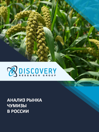 Маркетинговое исследование - Анализ рынка чумизы в России