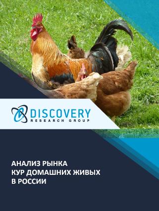 Маркетинговое исследование - Анализ рынка кур домашних живых в России