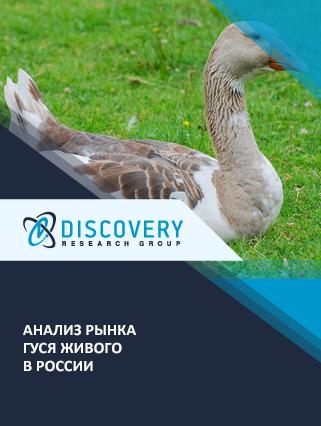 Маркетинговое исследование - Анализ рынка гуся живого в России