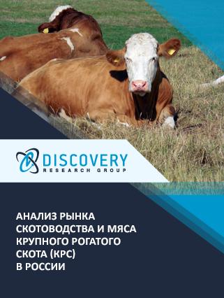 Анализ рынка скотоводства и мяса крупного рогатого скота (КРС) в России (с базой импорта-экспорта)