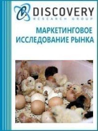 Маркетинговое исследование - Анализ рынка инкубаторов для птицы в России