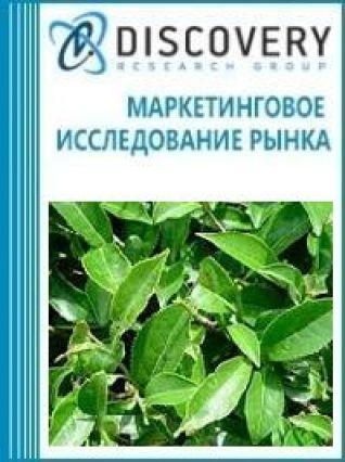 Анализ рынка оборудования для резки чайного листа в России