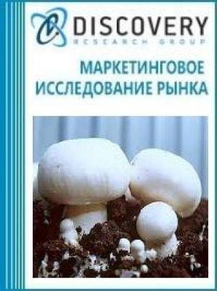 Маркетинговое исследование - Анализ рынка оборудования для выращивания грибов в России