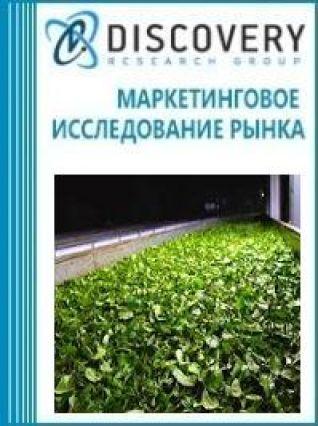 Анализ рынка роллеров для скручивания чайного листа в России
