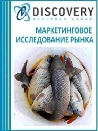 Анализ рынка соленой рыбы тилапии, сома, карпа, угря в России