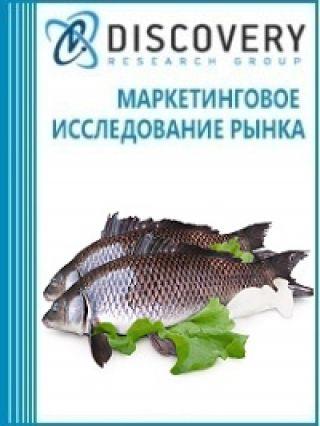 Анализ рынка замороженной тилапии, сома, карпа, угря в России