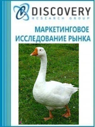 Анализ рынка живого гуся в России