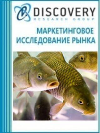 Маркетинговое исследование - Анализ рынка живого карпа в России