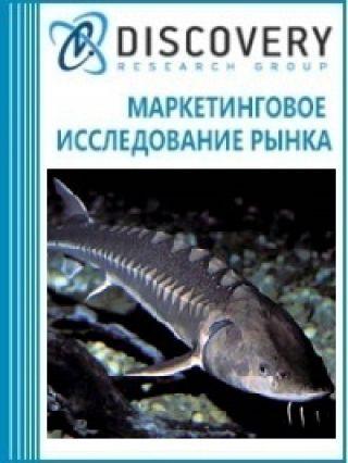 Маркетинговое исследование - Анализ рынка живого осетра в России