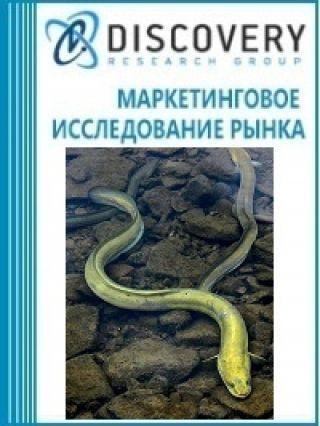 Маркетинговое исследование - Анализ рынка живого угря в России