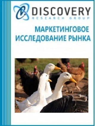 Анализ рынка птицеводства в России (с предоставлением базы импортно-экспортных операций)